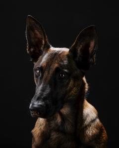 Katie's Dogs-240